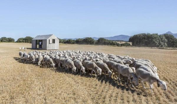 chalet au milieu des moutons