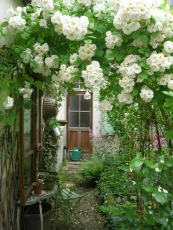 jardin vert fleuri printemps