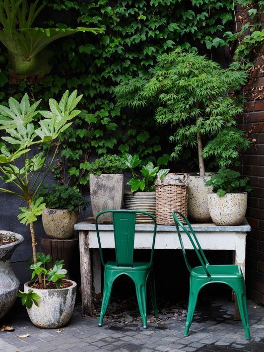 jardin verdure